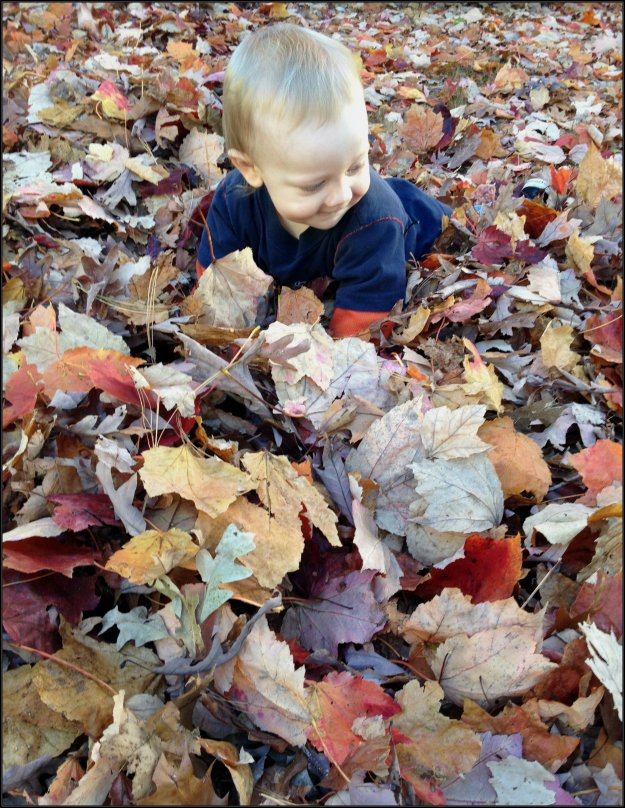 Jack in the leaves
